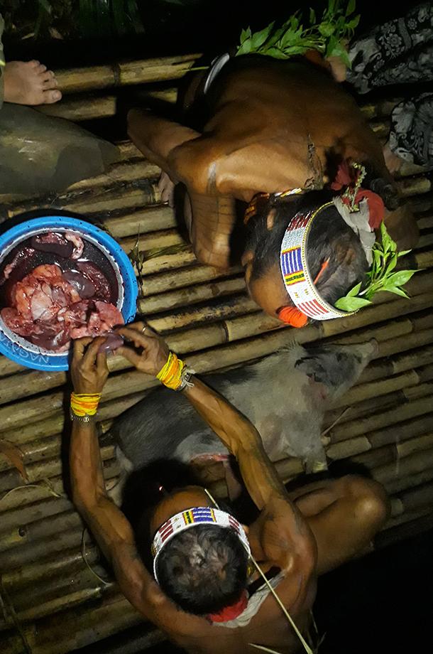 Deux shamans Mentawai et cochon