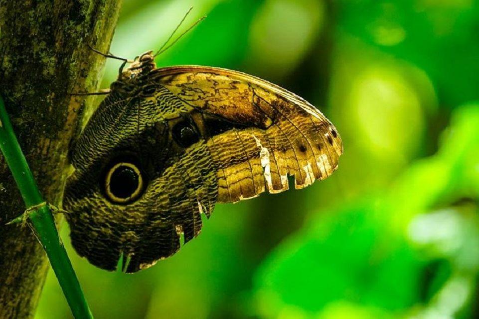 papillon sur fond vert