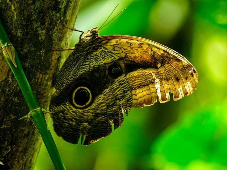 Papillon Amazonie Voyage ecolo