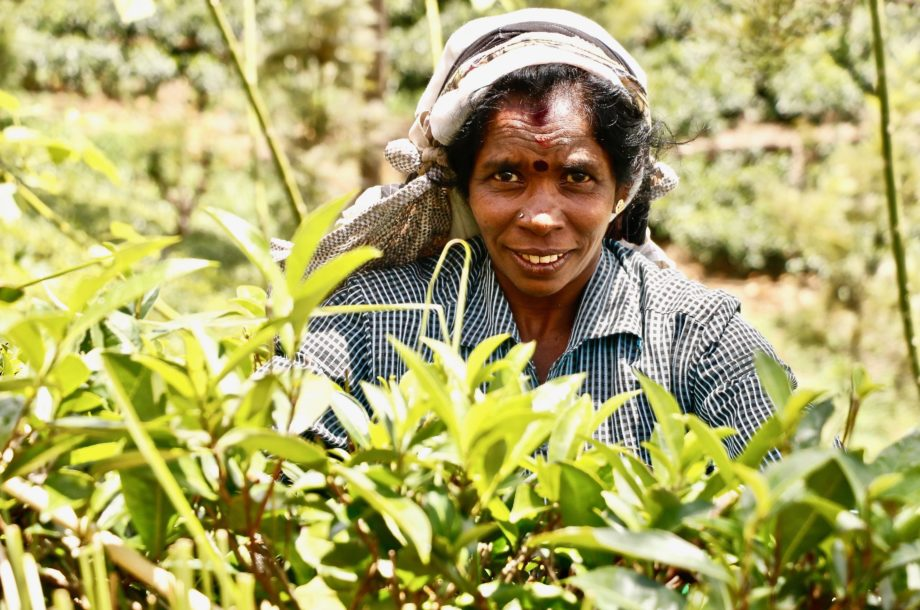 cueilleuse de thé de face destination voyage Sri Lanka