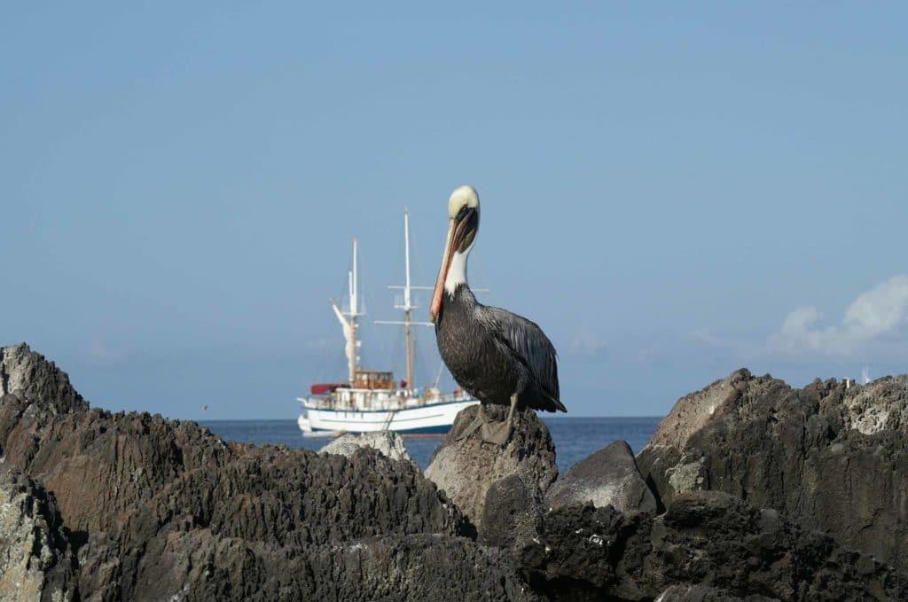 Croisière Galapagos Pelikan voyage en Équateur authentique
