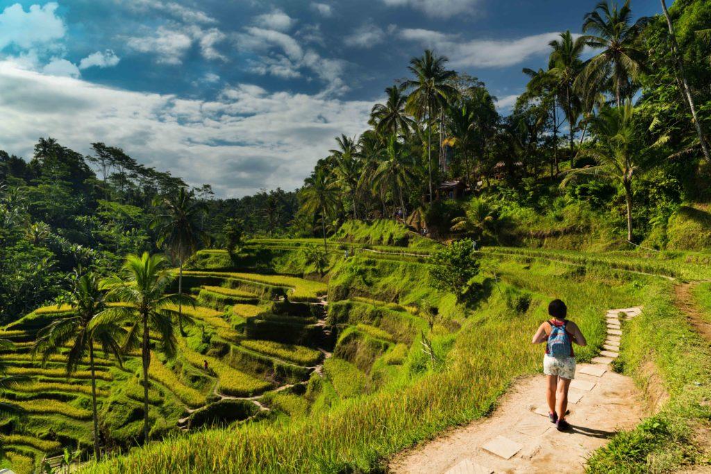 Promeneur de dos sur un chemin bordant les rizières en terrasse en Indonésie authentique
