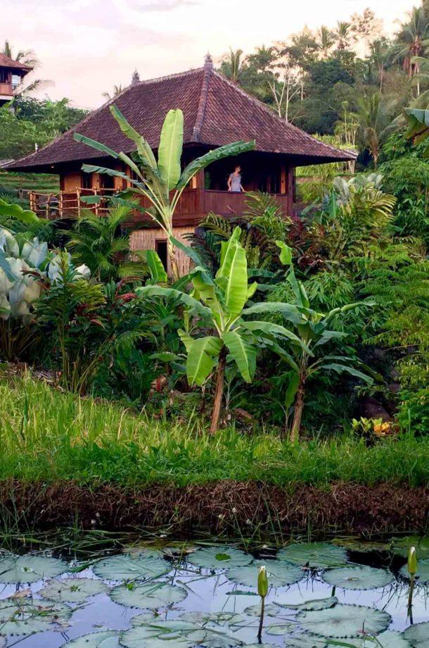 Bungalow dans la verdure avec marre et nénuphar en Indonésie
