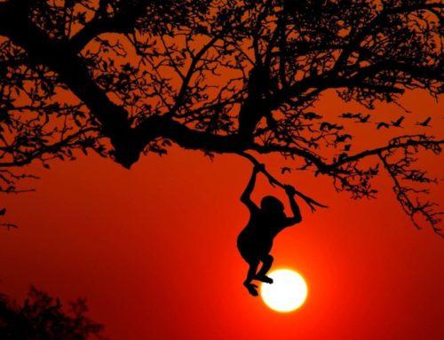 Légendes Mentawai : l'enfant qui devient singe