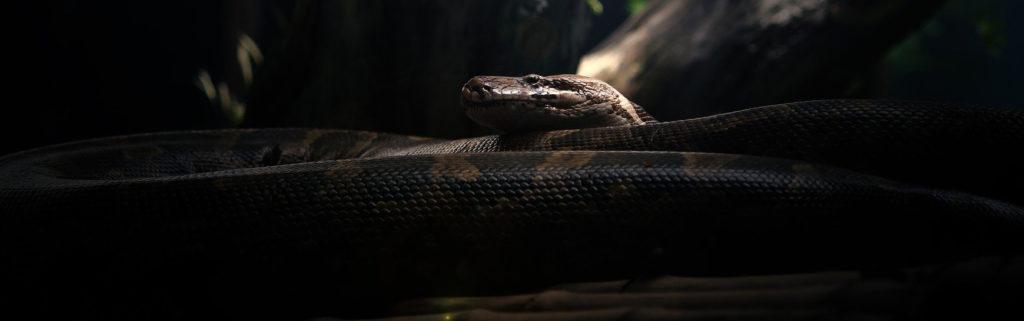 python dans l'obscurité légendes mentawai