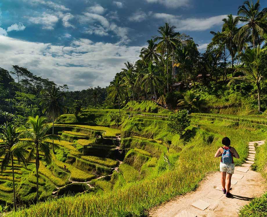 Marche dans les rizières en terrasse