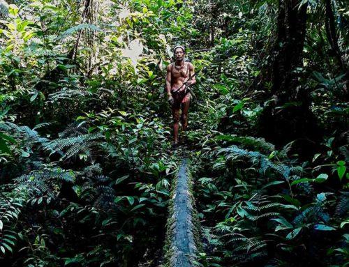 Peuples racines, peuples autochtones, peuples premiers.  Qui sont-ils ?