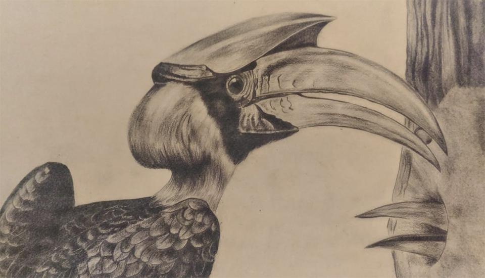 Toucan au crayon