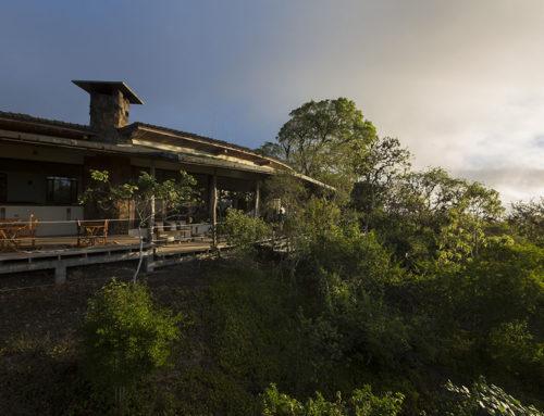 Se vautrer dans l'environnement accueillant des Galapagos