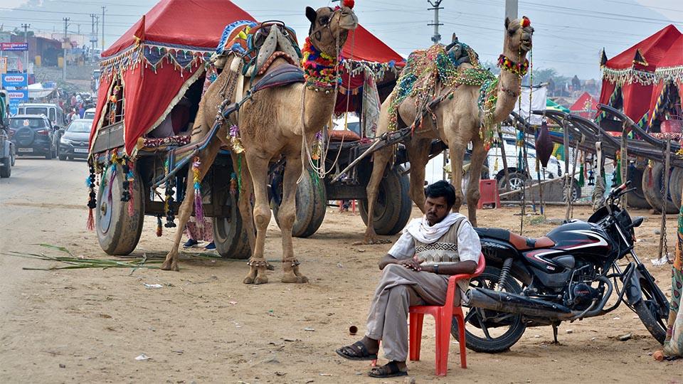 Inde_Rajesthan_Foire de Pushkar_homme assis avec dromadairs_Serenji Travel